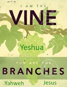 JOHN 15:5 - I am the vine, you are the branches: He that abideth in me, and I in him, the same bringeth forth much fruit: for without me ye can do nothing. KJV.