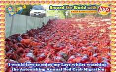 Around the World with Lays South Africa: #MostActiveLaysFan #layschipsSA I would love to enjoy my #Lays THAI SWEET CHILLI whilst watching the astonishing Annual Red Crab Migration in Australia :D