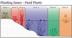 How To Grow Pond Plants
