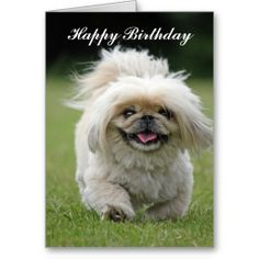 =>>Save on          	Pekingese dog happy birthday  greeting card           	Pekingese dog happy birthday  greeting card Yes I can say you are on right site we just collected best shopping store that haveThis Deals          	Pekingese dog happy birthday  greeting card today easy to Shops & Purc...Cleck link More >>> http://www.zazzle.com/pekingese_dog_happy_birthday_greeting_card-137486285515597478?rf=238627982471231924&zbar=1&tc=terrest