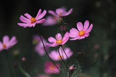 A lot of cosmos.  I've taken and developed so that the dark background.