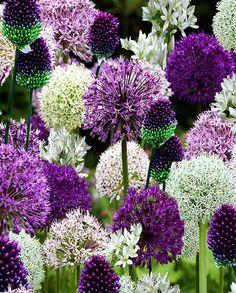 Flower Garden Borders, Cottage Garden Borders, Purple Garden, Colorful Garden, Garden Front Of House, Small Purple Flowers, Outdoor Flowers, Annual Flowers, Hardy Perennials