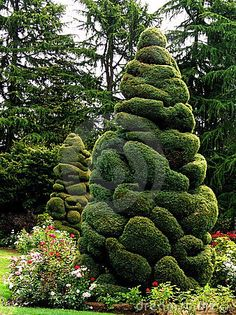 Photo about A shot of trees that have been shaped with topiary. Topiary Garden, Topiary Trees, Garden Art, Garden Design, Trees And Shrubs, Trees To Plant, Beautiful Gardens, Beautiful Flowers, Weird Trees