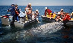 Whale watching up close in Costa Rica