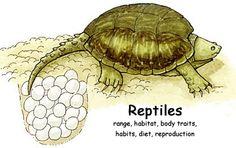 Science - Reptiles Index   Exploring Nature Educational Resource