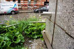 rain garden in use Rain Garden, Shades, Plants, Sunnies, Plant, Eye Shadows, Draping, Planets