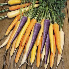 Shop for Wilko Carrot Harlequin Seeds at wilko - where we offer a range of home and leisure goods at great prices. Fruit And Veg, Fruits And Veggies, Carrot Seeds, Stationery Craft, Mixed Vegetables, Sweet Corn, Edible Garden, Business For Kids, Color Mixing