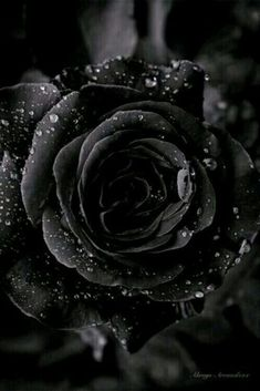 Great Backgrounds, Aesthetic Backgrounds, Black Flowers, Black Roses, Fairy Photography, Gothic Aesthetic, Black Aesthetic Wallpaper, Black And White Aesthetic, Love Rose