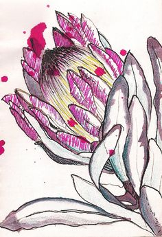 I love the open pen work of this flower with the bright scribble like shading on parts of the flower head Botanical Art, Botanical Illustration, Illustration Art, Protea Art, Nature Sketch, Flower Sketches, Art Sketchbook, Fabric Painting, Watercolor Flowers