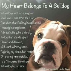 My Heart Belongs To A Bulldog.....