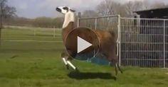 This Llama Prancing to DMX Wins the Internet