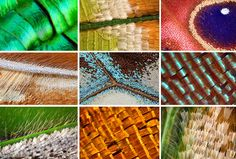 Macro Photographs of Butterfly And Moth Wings by Linden Gledhill