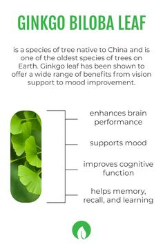 Ginkgo leaf has also been shown to support brain function as it can enhance brain performance, support mood and feelings of well-being. It also has the ability to increase blood levels of nitric oxide, which works to dilate blood vessels and improve circulation. This effect leads to increased blood flow in the brain, thus supporting memory, recall, learning, and more! You can find this brain boosting ingredient in our Daily Focus formula!