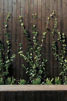 A garden of of small herbs and vines creates a fan of green as the plants creep up the outside walls. What at first seems to be a stark use of artificially dark wood reveals itself to be unironically natural: a soothing and woodsy backdrop for this home i