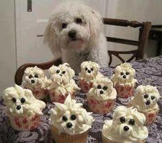 Tip voor de wat gevorderde cupcakes bakkers onder jullie!     (foto via Gregg Braden)