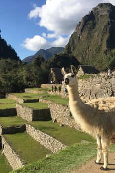 Read our list of virtual activities to keep the entire family entertained and that can take you from Peru to Paris. Adventure Trips, Old And Teen, Virtual Travel, Best Hikes, Photo Book, Peru, Activities For Kids, National Parks, Africa