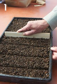 Starting from Seeds: You don't need a greenhouse to produce healthy, vigorous transplants....