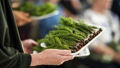 Mye tyder på at plantebasert kost var vel så viktig for vikingene som kjøtt og fisk. Dette skal forskere nå se nærmere på. Viking Food, Paleo Diet, Prehistoric, How To Dry Basil, Planters, Herbs, Cooking, Modern, Kitchen