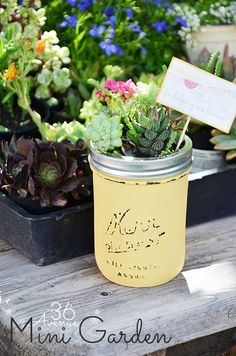 Gardening Gift Ideas - Super Cute little mini gardens in jars! Great New Neighbor gift or housewarming gift. (or a dorm room gift for the college student in your life! Succulent Planter Diy, Succulents Garden, Succulent Ideas, New Neighbor Gifts, Diy Design, Design Ideas, Outdoor Gardens, Mini Gardens, Miniature Gardens