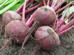 Kymmenen helpointa viljelykasvia suomen oloihin