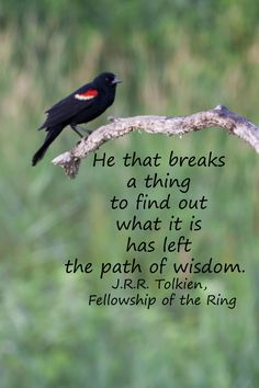 """""""He that breaks a thing to find out what it is has left the path of wisdom."""" J.R.R. Tolkien -- For a fresh collection of fifty quotations on knowledge, go to http://www.examiner.com/article/fifty-quotations-inspire-education-and-learning"""