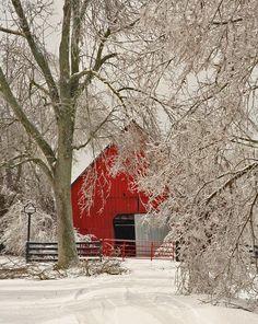 rosiesdreams: Rojo en blanco