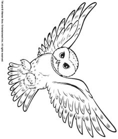 Back Print This Snowy Owl Color Page Animal Coloring Pages