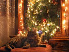https://flic.kr/p/wKPyY | Holidays | Srećan Božić i Nova godina :) Merry Christmas and a  Happy New Year :)  Vuchko enjoys under the Christmas lights