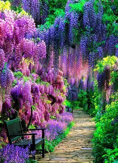 The Wisteria Tunnel at Kawachi Fuji Gardens, Kitakyushu, Japan - Natural Wonders Around the World You'll Have to See to Believe - Photos Beautiful Landscapes, Beautiful Gardens, Beautiful Flowers, Beautiful Scenery, Flowers Nature, Spring Flowers, Beautiful Things, Beautiful Places In Japan, Beautiful Forest