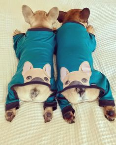 Frenchies in french bulldog pajamas!  www.bullymake.com via: @frank_and_oliver