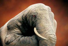 elephant - hand painting