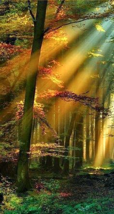 Golden Rays In The Schwarzwald - Black Forest Of Germany