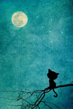 Little kitty & the moon