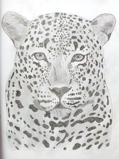 Leopard Drawings, Sketches, Drawing, Portrait, Draw, Grimm, Illustrations