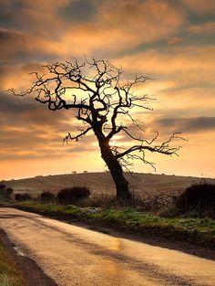 Dead Tree II by Peter Ribbeck