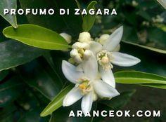 Aranceok.com