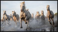 Forceful Galloping