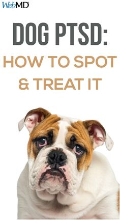 You may have heard about posttraumatic stress disorder (PTSD) in people, but did you know dogs can get it, too? Stress Disorders, Anxiety Disorder, Signs Of Stress, Blueberry Desserts, Post Traumatic, Separation Anxiety, Positive Reinforcement, Healthy Pets