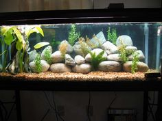 fish tank ideas | Member's Planted Tanks (Follow Directions To Submit A Tank)