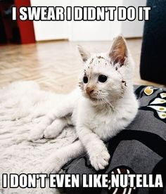 Nutella @Haylee Atkinson Atkinson Porterfield - it's you all in one!! Nutella and cats!!