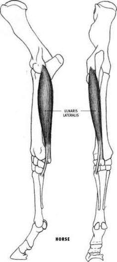 Comic Legs Rear View