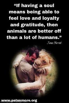 essay on dog is a faithful animal