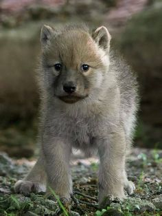 awwww ! so cute !