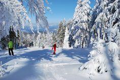 Reiseplaza: Bayerischer Wald - Die Urlaubsregion Sankt Englmar bietet viele Möglichkeiten zu aktiver Erholung (Foto: epr/Urlaubsregion St. Englmar) Mount Everest, Mountains, Nature, Travel, Outdoor, Pictures, Family Vacations, Recovery, Outdoors