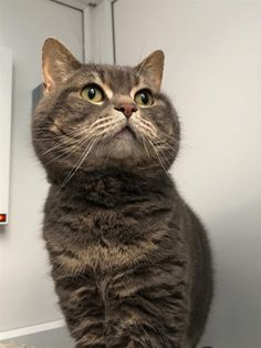 There are lots of ways you can help Blue Cross. Have you thought about rehoming or sponsoring a pet? Blue Cross, Chubby Cheeks, White Cats, Charity, Pets, Animals, Animales, Animaux, Animal Memes