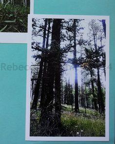 Rebecca Kouchit, photographs of Greer Arizona, Sunset in the White Mountains, wildflowers of arizona, wild daisies, aspen trees in autumn, art gallery in tucson