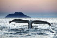 Artic Tail by naturbilde #SocialFoto