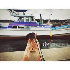 【gran0624】さんのInstagramをピンしています。 《海の男だぜ〜〜〜 ・ ・ #welshterrier #dog #ウェルシュテリア #犬 #Instagram #インスタグラム #terrier #テリア #海 #船 #海の男 #漁師は素敵な仕事 #散歩は海へ》