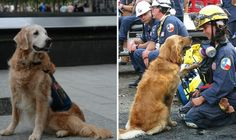 Meet Bretagne: the last known living search and rescue dog who worked at Ground Zero.