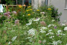 de tuin bloemen